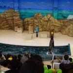水族館に着くと…ちょうどアシカのショーが始まるところ!高倉山幼稚園のお友だちが大集合でした!の様子